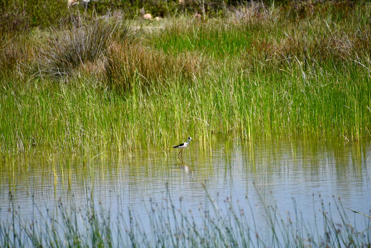 Bird on Lagoon at Patara