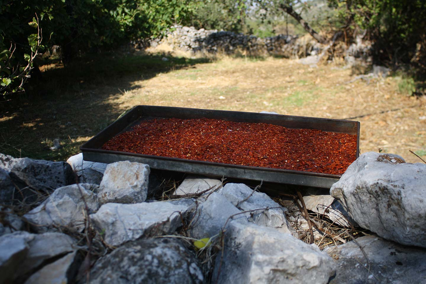 Drying Chilli