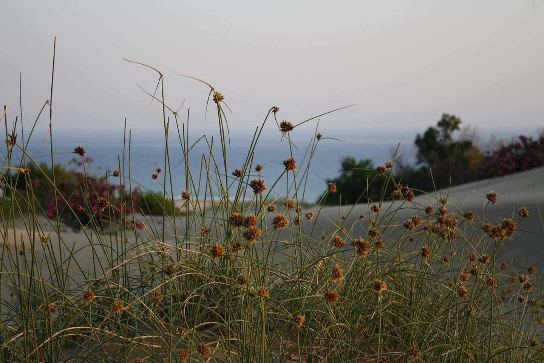 Patara Beach Flowers in the Dunes