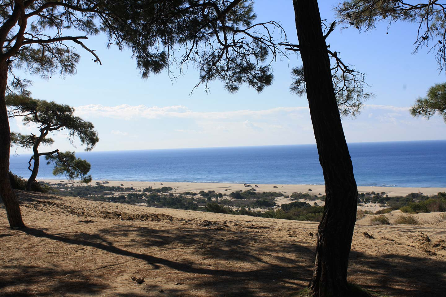 Patara Beach Through the Trees