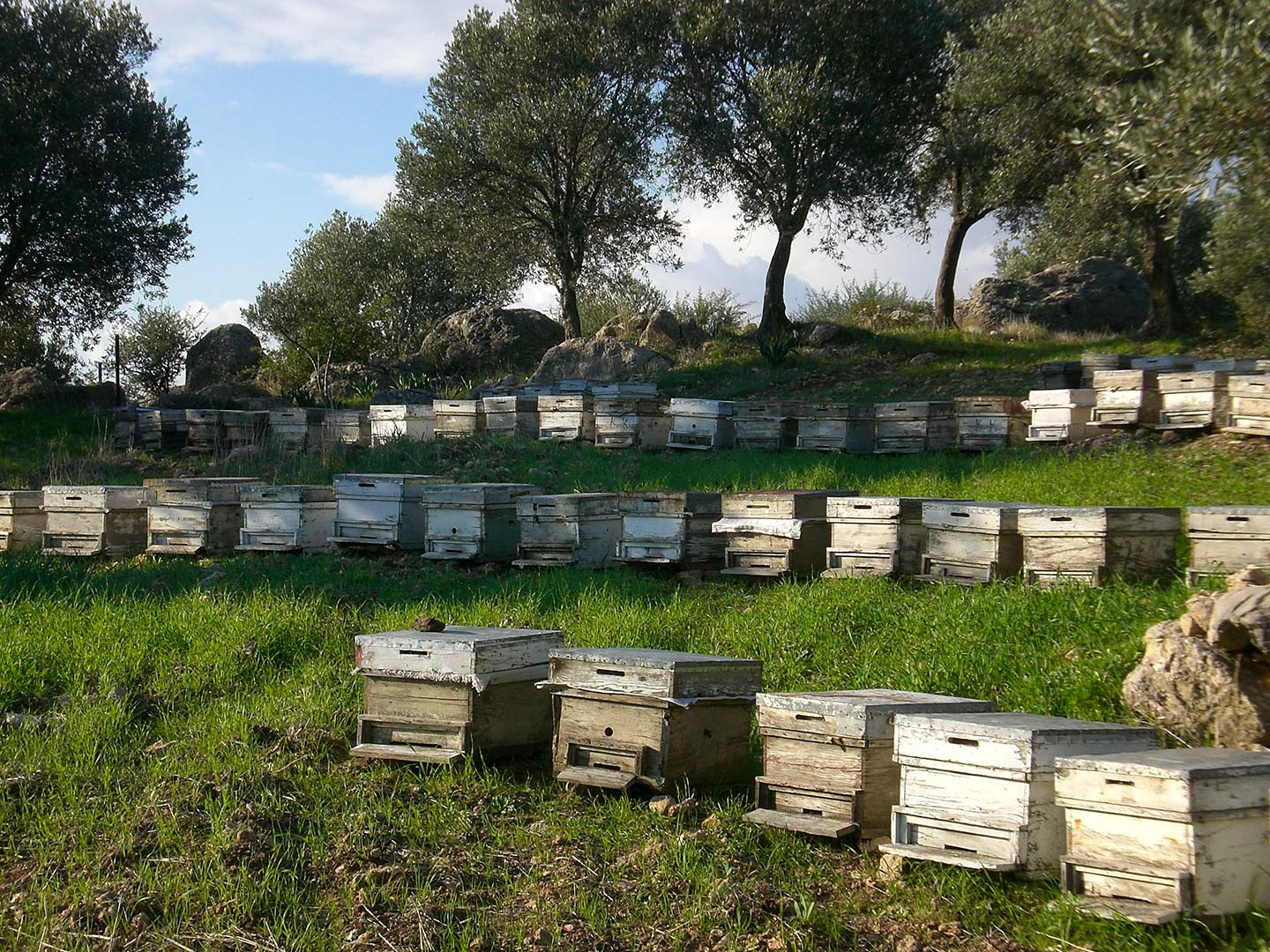 Village LIfe Beehives