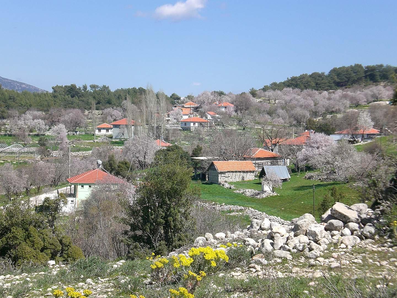 local countryside walks 6